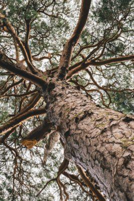 Ref.sak naboen måtte fjerene trær (1)