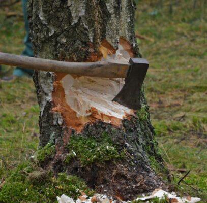 nabolovens spesialregel om trær