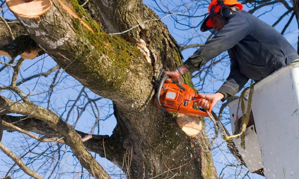 Viktige faktorer for å beholde treet